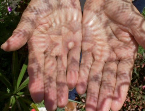 Randa Testigo: Corporalidades, Materialidades y Hábitat
